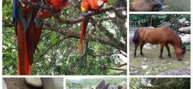 Finca y Zoológico Ujarras (Buenos Aires)