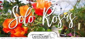 Jardín Solo Rosas | 10 de junio 2018