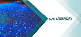 Bioluminiscencia | 8 de diciembre 2018