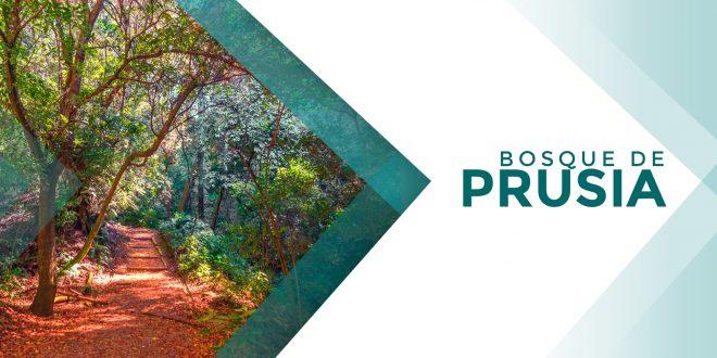 Bosque de Prusia | 16 de diciembre 2018