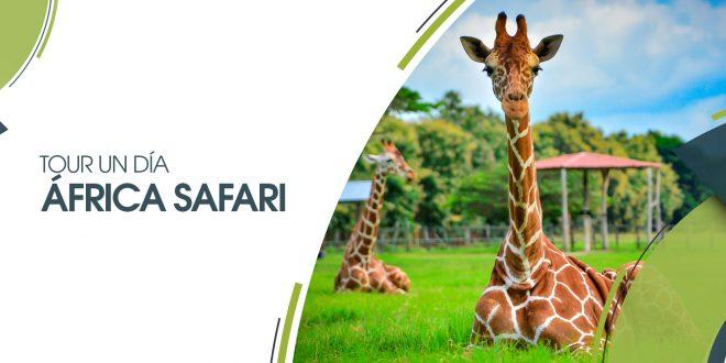 África Safari | 25 de mayo 2019