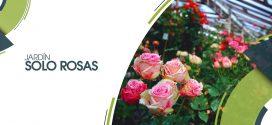 Jardín solo rosas | 19 de mayo 2019